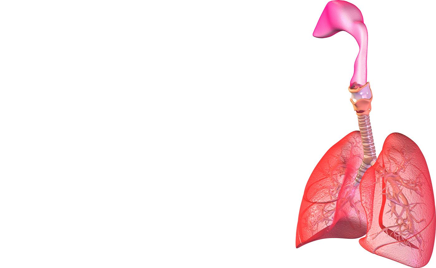Cancer: Un modèle en 3D de tumeurs humaines