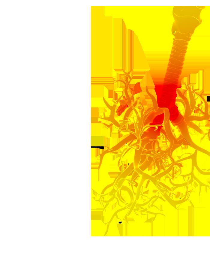 Développement   d'un   test   d'inhalation   pour   évaluer  in   vitro    la   toxicité   des   cigarettes  électroniques