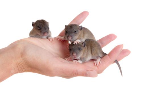 L'animal est-il un modèle biologique fiable de l'homme?