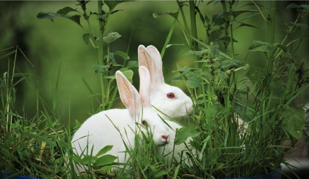 UE: Accélérer la transition vers une innovation sans animaux